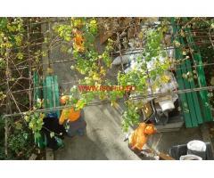 Почистване на двор и градина с Тепето Пловдив